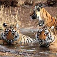 Corbett, Nainital Tour 3N/4D Package