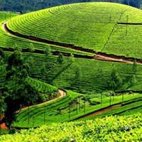 Mysore - Ooty - Kodaikanal Tour