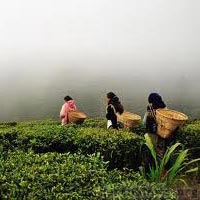 Gangtok - Tsomgo Lake - Pelling - Darjeeling Tour
