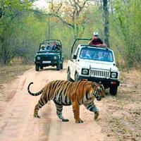 Safari Tour