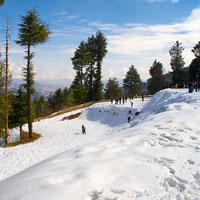 Shimla - Kufri - Fagu - Shimla Tour