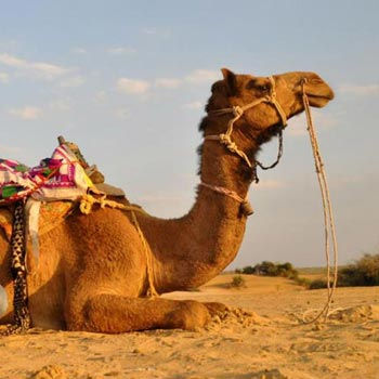 5 Days Camel Safari Tour