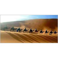 3 Days Camel Safari Tour
