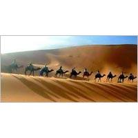 3 Days Camel Safari Tour
