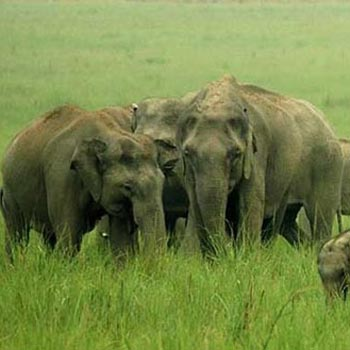 Elephant Safaris India Tour
