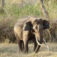 Wildlife Tour South India