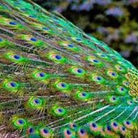 Birding Tours Rajasthan