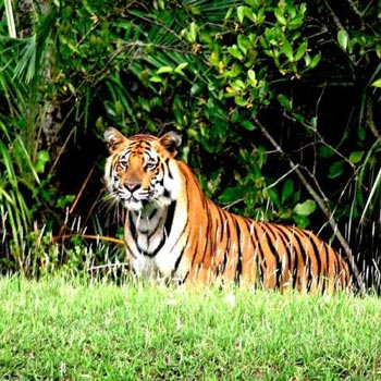 City & Forest (Kolkata 2N - Sundarban 2N) Tour