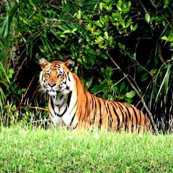 Three Jewels of Bengal (Kolkata 4N - Sundarban 2N - Shantiniketan 2N) Tour