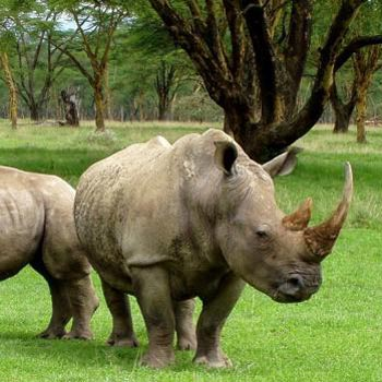 The Rhino Land (Kaziranga 2N - Guwahati 1N) Tour Package