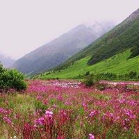 Sweet Memory of Khangchendzongha Tour
