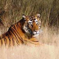 Panna Wildlife Safari Tour
