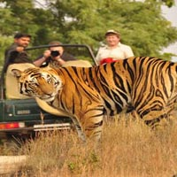 Jeep Safari - Corbett National Park