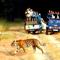 Tiger Trail Wildlife Tour