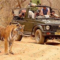 Wildlife Sub Continental Tour