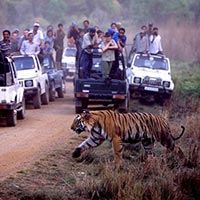 Wildlife Tour Packages