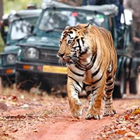 Ranthambhore Tour Packages