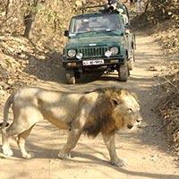 Gir National Park Tour Package