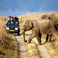 JIM CORBETT TO RANTHAMBORE