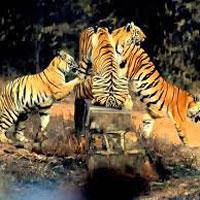 Tiger Trail In