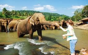 Srilanka Tour 6 Days Tour