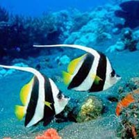 Andaman Tour 6 Day