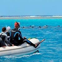 Harriet Baratang Island Tour
