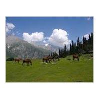 Kashmir Tour - 6 Nights / 7 Days Tour