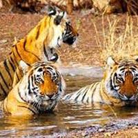 Delhi - Jaipur - Agra Tour with Ranthambore
