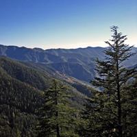 Shimla Special trip Tour