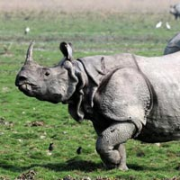 Wild Life In Kaziranga Tour