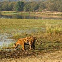 Wild Life In Kaziranga Tour