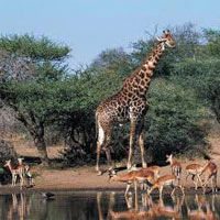 South Africa Explorer Package