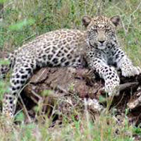 South Africa with Garden Route Package