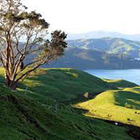 North New Zealand Tour