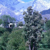 Dharamshala - Dalhousie Jeep Safari Tour