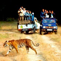 Corbett National Park Tour with Nainital