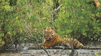 Tour Programme of Sundarban