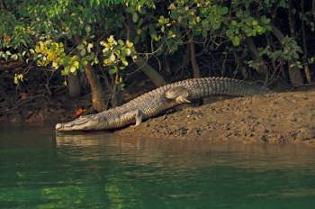 Exciting Sundarban Tour