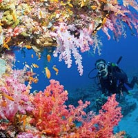 ABC Andaman Coral Tour