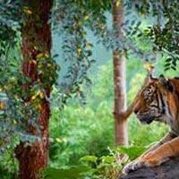 Rishikesh And Rajaji National Park Tour