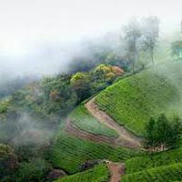 Magical Athirapally with Munnar Tour
