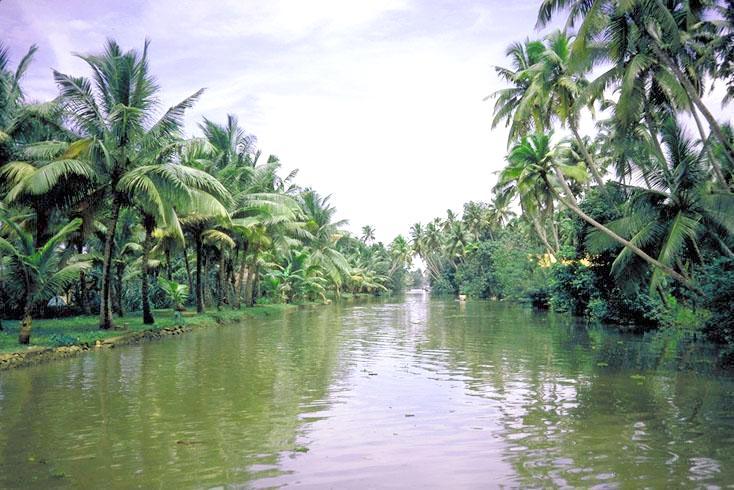 Kerala Tour package Cochin - Munnar - Alleppy - Cochin -Cochin
