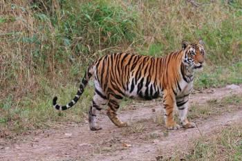 Panar Pani Jungle Safari I  Package