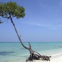 Exotic Honeymoon Package Andaman