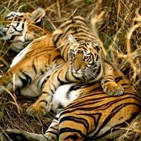 World largest Mangrove forest Tour (Sundarban)