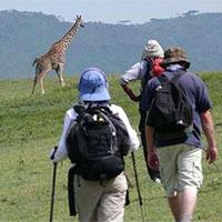 7 Days Walking Safaris In Kenya Tour