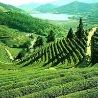 Beautiful Darjeeling Gangtok Tour