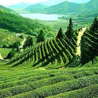 Darjeeling - The Queen of Hills for 02 Nights & 03 Days Tour