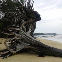 Andaman 5 Nights 6 Days Tour